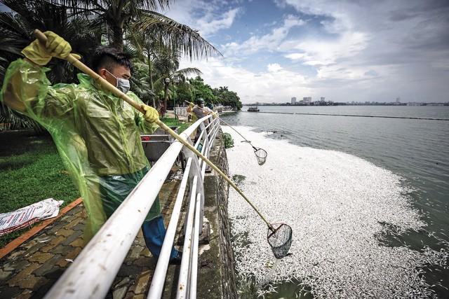 Tình trạng cá chết hàng loạt ở Hồ Tây lặp lại nhiều lần kể từ 2016 tới nay. Ảnh: Việt Linh