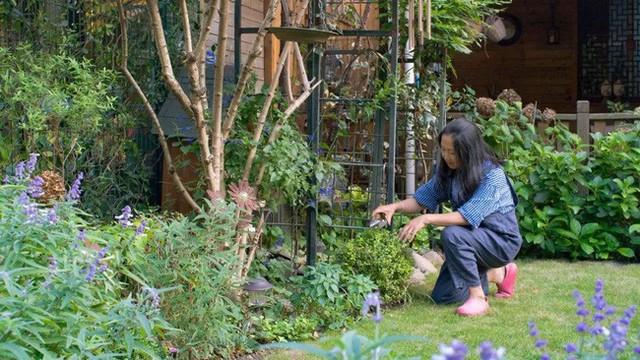 Chị Chen yêu nhất là màu trắng và màu tím, vì thế, chị luôn ưu tiên trồng nhiều loại hoa có hai gam màu này để tăng vẻ đẹp nổi bật và lãng mạn cho khu vườn nhỏ của gia đình mình.