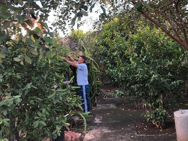 Nằm ở thành phố Riverside (cách trung tâm quận Cam, California) 45 phút chạy xe, khu vườn 900m2 của ông Hồng Phước Quới, 75 tuổi thường được các cửa hàng hoa quả lui tới mua các loại quả thuần Việt như táo ta, nhãn, ổi, lựu, cam, bưởi... về bán.
