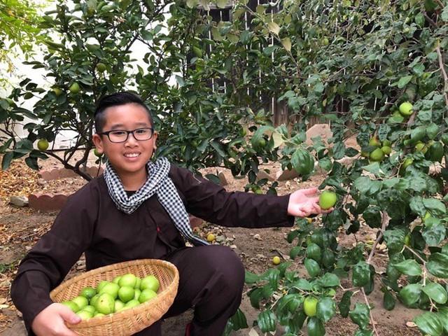 Trong đó ông Quới cho biết tự hào nhất là 5 cây táo ta được ông mang từ Việt Nam sang từ 20 năm trước. Hồi đó còn dễ nên tôi mang một cành nhỏ sang, sau này ươm giống nhân ra vườn. Giờ gốc táo nhà tôi rất to, một cây có thể cho thu hoạch vài trăm kg mỗi vụ. Ở bên này ít người có cây này nên các cửa hàng bán hoa quả Việt rất thích, ông Quới cho biết.