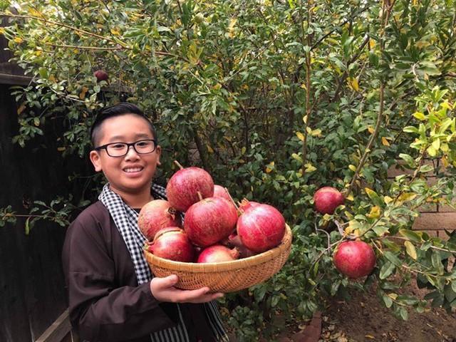 Trong các cháu của ông Quới có cậu bé Michael Minh Hồng, 10 tuổi rất gắn bó với khu vườn. Phổi bé không tốt nên táo tàu của ông nội được trưng dụng hầm canh.