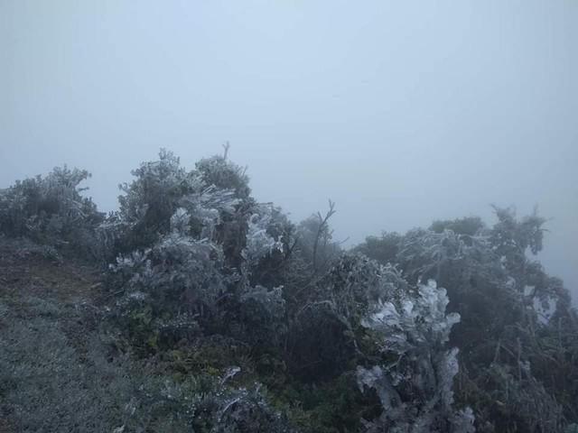 Cây cối và nhiều đồ vật bị băng tuyết bao phủ. Ảnh: Quang Huy