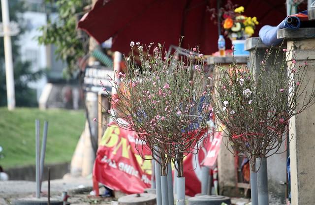 Trước cổng chợ hoa Quảng Bá bất ngờ xuất hiện những cành đào dù Tết còn đúng 2 tháng nữa mới tới.