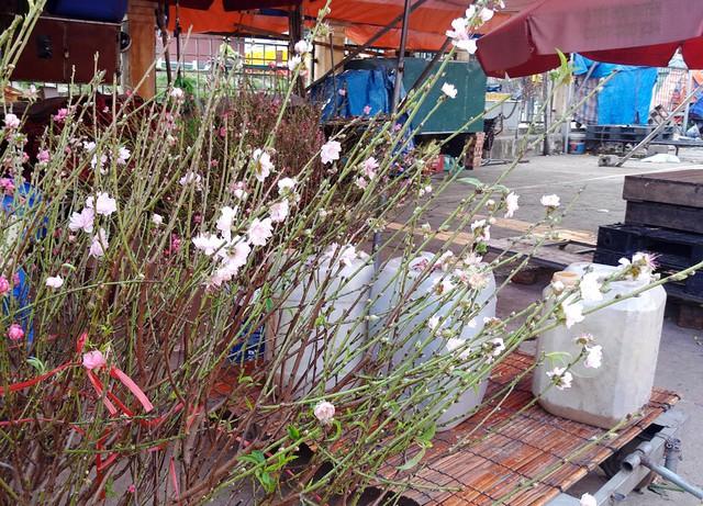 Theo nhiều tiểu thương tại chợ hoa Quảng Bá, đây không phải là đào Nhật Tân.