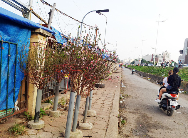 Phía bên ngoài đường nhiều cành đào được bày bán với giá từ 150.000 đồng trở lên.