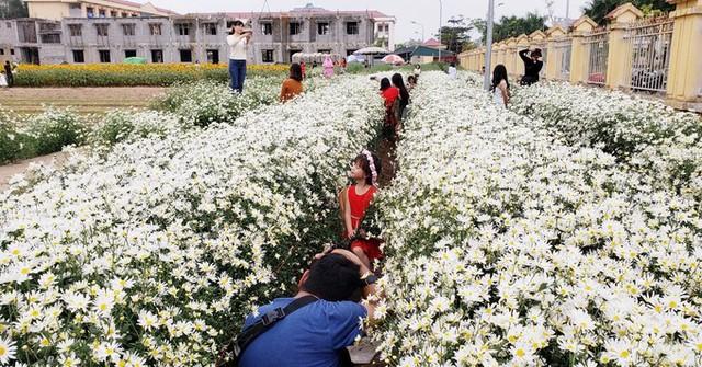 Thời gian gần đây, vợ chồng anh Hoàng Văn Hạnh, trú tại phường Tân Bình (thành phố Hải Dương) đã tận dụng mảnh vườn phía sau Trường tiểu học Tân Bình vốn bỏ không để cải tạo, trồng cúc họa mi trên diện tích hơn 3.000 m2.