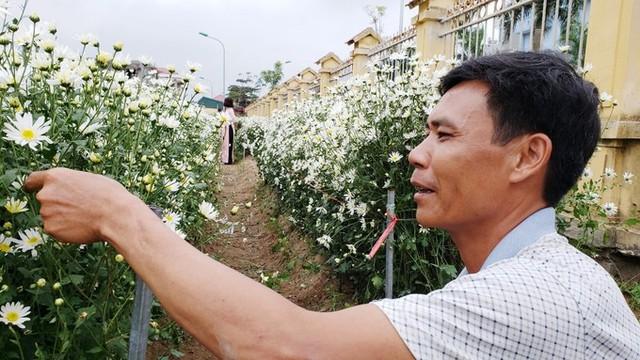 Anh Hạnh chia sẻ đây là vụ cúc họa mi đầu tiên của gia đình. Vợ chồng tôi mua giống từ Hà Nội về trồng thử nghiệm với quan niệm khi hoa nở có ít khách thì ngắt đem bán, còn nhiều khách sẽ để hoa nở tự nhiên, làm điểm dịch vụ, anh nói.