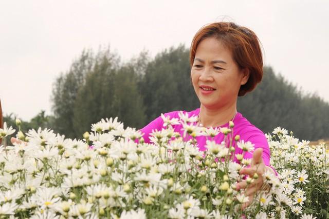 Vượt 50 km từ Hải Phòng lên Hải Dương chỉ để ngắm hoa cúc họa mi và chụp hình rồi về, bà Nguyễn Thị Vân (Hải Phòng) chia sẻ, tôi rất yêu loài hoa này, nhưng những năm trước còn vướng bận công việc, năm nay có thời gian lại nghe nói có vườn cúc đẹp ở Hải Dương nên tìm đến.