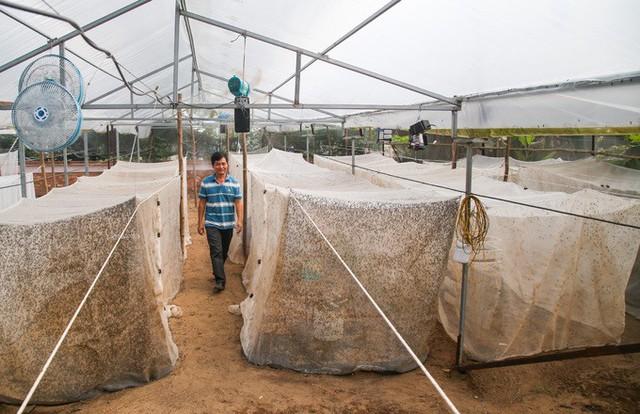 Trang trại có quy mô hơn 500 m2 với 32 chuồng nuôi, được ông Bé đầu tư hơn 100 triệu đồng thi công. Trên trần trại lắp nhiều quạt nhằm thông gió, cân bằng nhiệt độ với môi trường bên ngoài.
