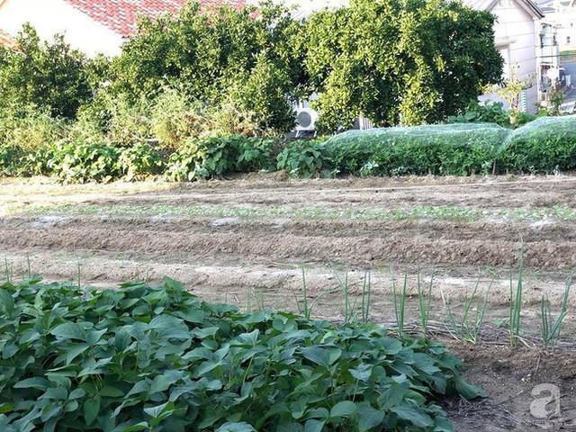 Khu vườn rộng thoáng giúp chị Hà thỏa sức trồng cây.