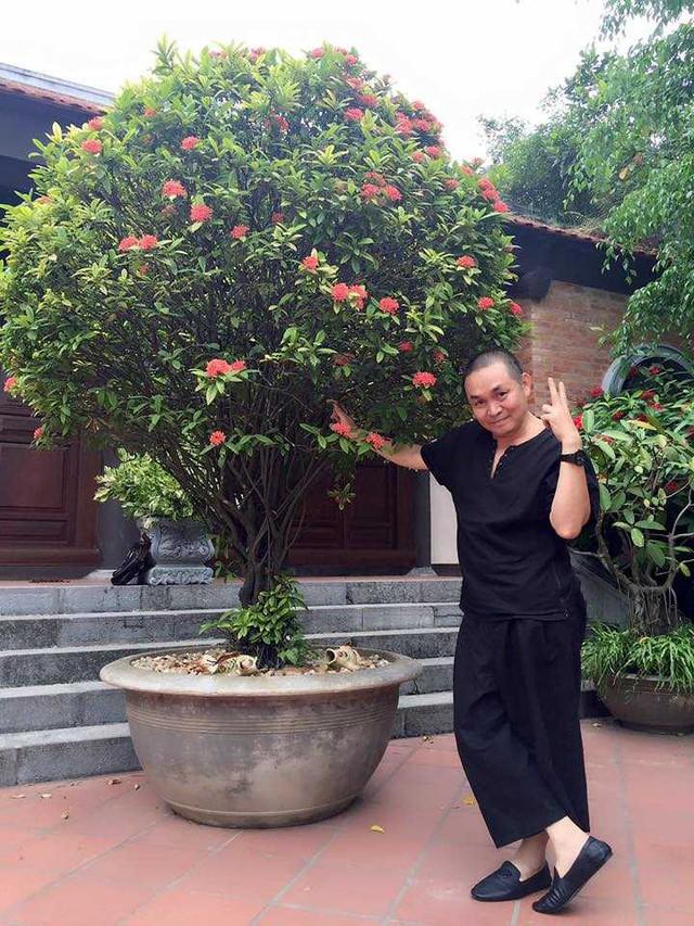 Cây hoa mẫu đơn cổ trong sân nhà mà nghệ sĩ Xuân Hinh cực yêu thích