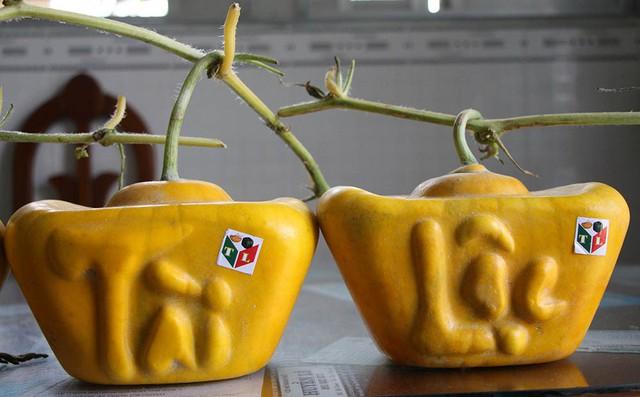 Năm nay, ông Liêm chỉ đưa ra thị trường 40 cặp dưa hấu thỏi vàng