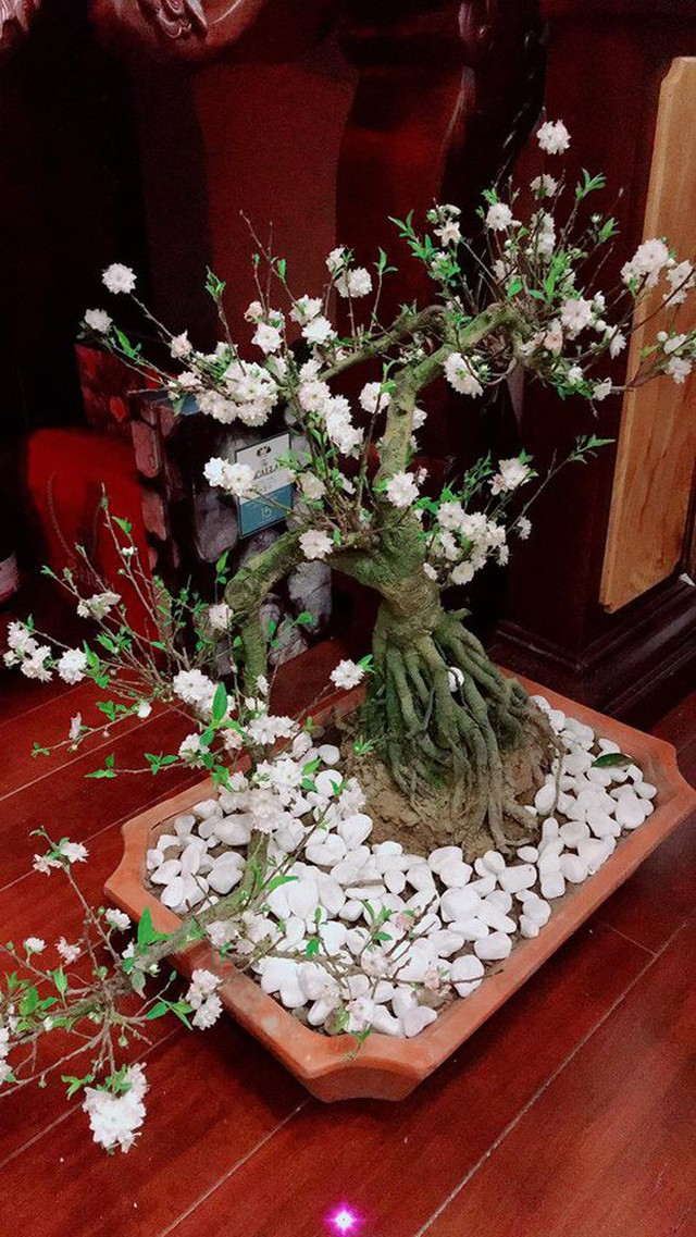 Tuấn Hưng thì lại chẳng cần phải mua sắm nhiều, năm nay giọng ca Nắm lấy tay anh đầy mắn mắn khi được bạn bè cùng người hâm mộ liên tục gửi những lãng hoa tết đến để trang hoàng nhà cửa.