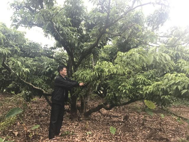 Nửa thế kỷ chăm 12 gốc cây, lão nông đổi đời không ngờ
