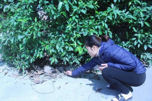 Vị trí chị Nhàn tìm thấy vỏ đạn cạnh gốc cây trước cổng vào nhà. Ảnh: Đ.Tùy