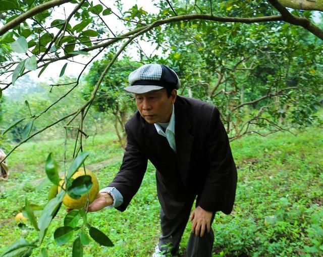 Ông Dương Xuân Nam trồng rất nhiều cây ăn trái trong khu vườn của gia đình.
