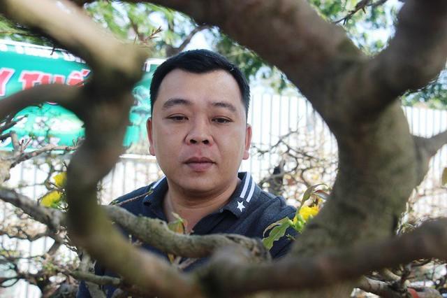 """Nhà vườn Đại Luân (TP Quy Nhơn) cho biết: """"Năm nay, tôi mang hàng chục gốc mai vàng có độ tuổi từ 30 năm trở lên để bán dịp Tết. Tùy theo kích cỡ, dáng dấp, mỗi gốc có giá dao động từ 50 triệu đến 300 triệu đồng""""."""