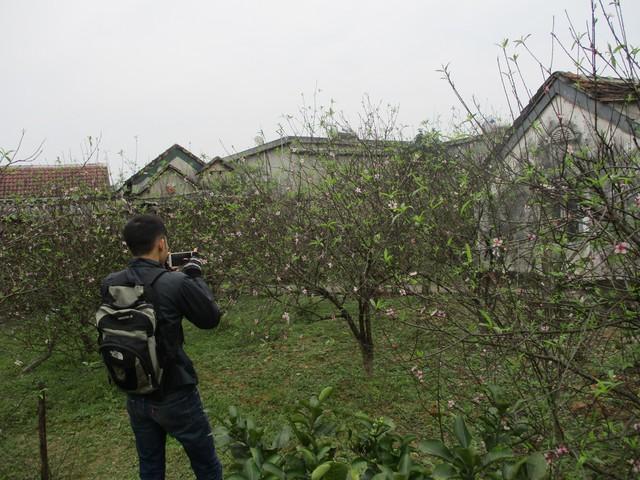 Dịp Tết, rất nhiều khách chơi đào đã tìm đến xã Kỳ Tân để chọn hoa