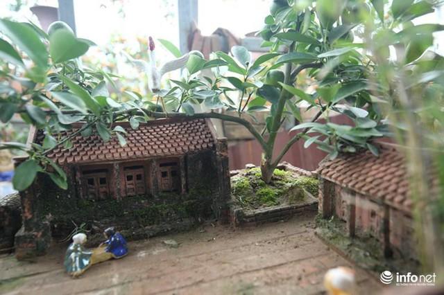 Anh Quang, chủ một nhà vườn chuyên làm tiểu cảnh Tết tại Tứ Liên (Tây Hồ) cho biết, những bồn tiểu cảnh Tết được nhiều người tìm mua bởi sự mộc mạc, lại mới lạ hơn so với những chậu quất truyền thống.