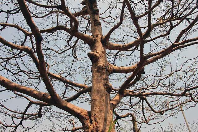 Thân cây to khỏe