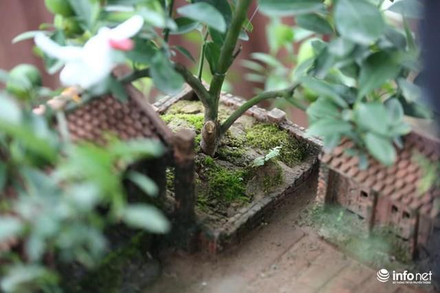 Điểm nhấn của tiểu cảnh ba gian này là cây quất Bonsai nhỏ xíu. Anh Quang cho biết, trồng cây trong tiểu cảnh này cực khó, đòi hỏi khâu chăm sóc rất tỉ mỉ. Bởi lẽ không gian đất để trồng chỉ khoảng 10cmx10cmx1cm. Đây là không gian đất rất nhỏ, khó để cây sống khỏe mạnh.