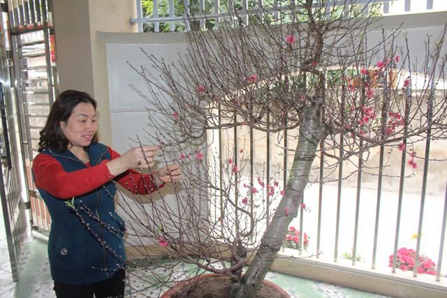 Mẹ tuyển thủ U23 đang chăm cây đào đợi Toàn về đón Tết. Ảnh: Đ.Tùy