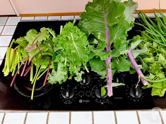 Thu hoạch rau trong vườn.