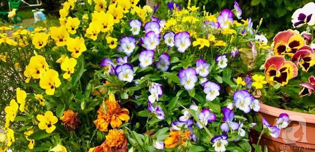 Khu vườn yên bình hơn vào những ngày cuối tuần, khi các con nô đùa trên bãi cỏ, cùng ngắm các loại rau, hoa mẹ trồng. Cả gia đình cùng xắn tay dọn vườn, nhổ cỏ hay thu hoạch rau quả cũng là niềm vui và hạnh phúc giản dị, bình yên của chị.