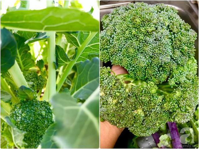 Chị Phước trồng nhiều loại rau Việt.