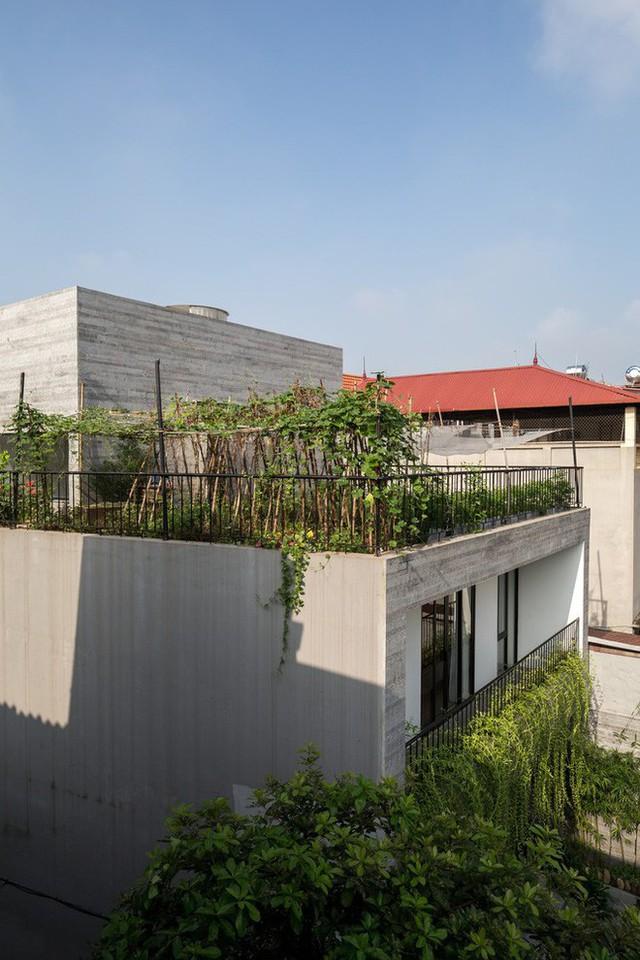Sân thượng được sử dụng làm vườn trồng rau.
