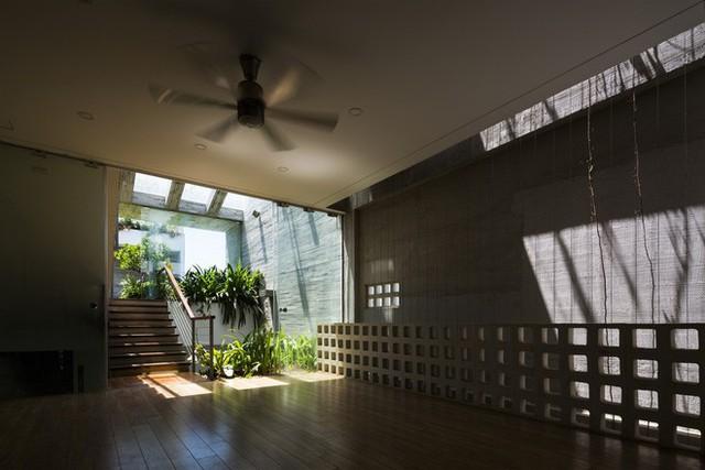 Các không gian trong nhà đều được tiếp cận với ánh sáng, cây xanh.