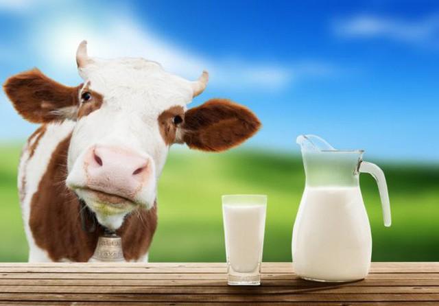 Chuyên gia Vũ Thế Thành: Sữa mẹ tốt nhất cho em bé, sữa bò tốt nhất cho... con bê!