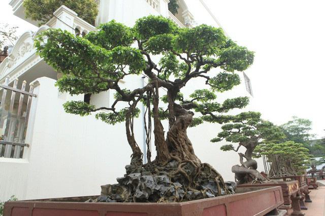 Vườn cảnh triệu đô của đại gia Phú Thọ