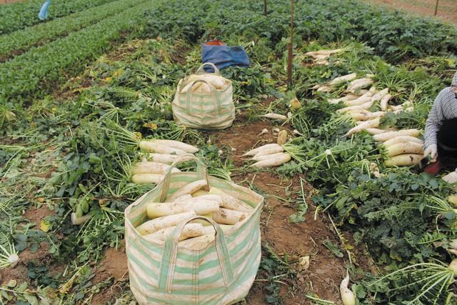 Nông dân nhổ bỏ, người tiêu dùng vẫn phải mua nông sản giá cao