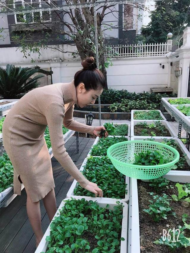Mới đây, người đẹp còn chia sẻ những hình ảnh mình tự tay thu hoạch rau tự trồng trên sân thượng khiến nhiều người bất ngờ.