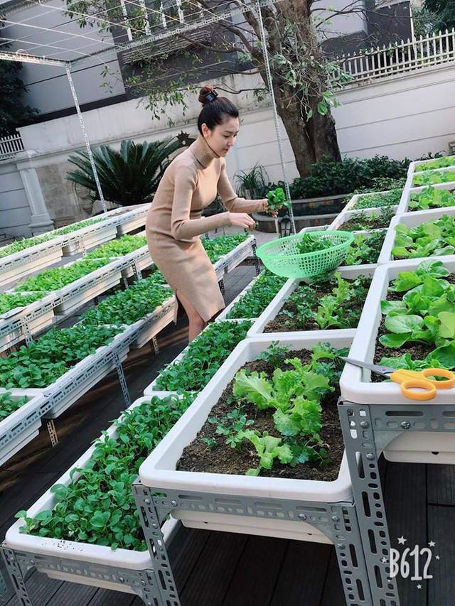 Chiều ra vườn hái rổ rau tự trồng được vào làm cơm! Niềm vui chỉ đơn giản thế thôi - Người đẹp hào hứng.