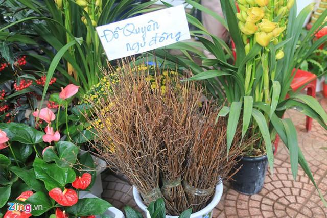 Hoa đỗ quyên ngủ đông được bày bán ở Hà Nội.