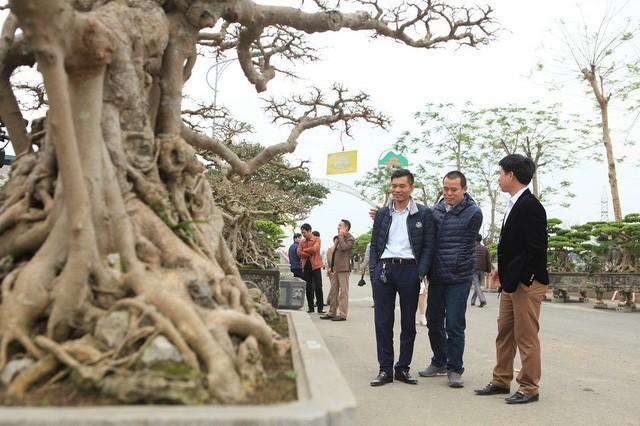 Dù được mua vào những thời điểm khác nhau nhưng bộ ba Tam đa giống như một tác phẩm nghệ thuật giúp tôn lên vẻ đẹp cho từng cây.