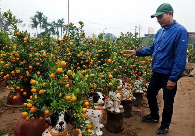 Những cây quất bon sai được nhiều khách hàng ưa thích vì sự nhỏ gọn, nhiều dáng cây đẹp.     ảnh: K.O