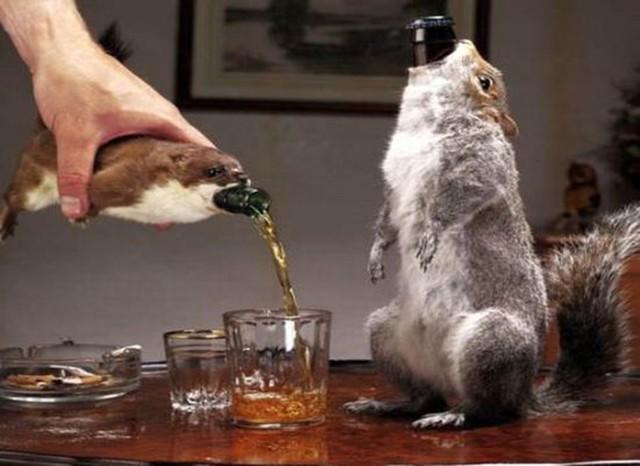 Chai bia có giá đắt đỏ nhờ được nhồi trong xác động vật chết