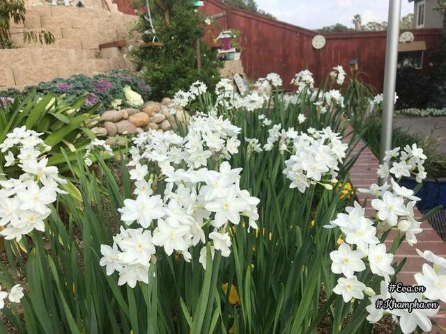 Con chị thường hay nhờ mẹ cắm hoa mang tặng cô giáo. Nhà trồng hoa quanh năm nên chị không phải mua hoa tươi về cắm.