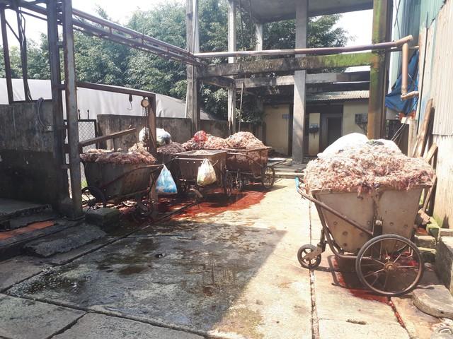 Những phế phẩm sau khi giết mổ lợn được chất đống gây ô nhiễm môi trường sống của người dân xung quanh (ảnh chụp tháng 3/2018). Ảnh: Cao Tuân