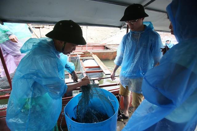 Lái buôn từ các tỉnh, thành: Điện Biên, Lai Châu, Hà Nội, Hòa Bình,...tìm đến hồ Gò Miếu để mua cá lăng. Giá cá lăng được ông Lưu Văn Hạnh bán tại bè là 75.000 đồng mỗi kg.