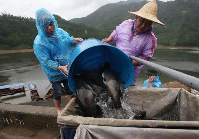 Năm 2017, nhà tôi khai thác được 60 tấn cá. Năm 2018 dự kiến đạt 100 tấn, doanh thu khoảng 3 tỉ đồng, ông Lưu Văn Hạnh nói.