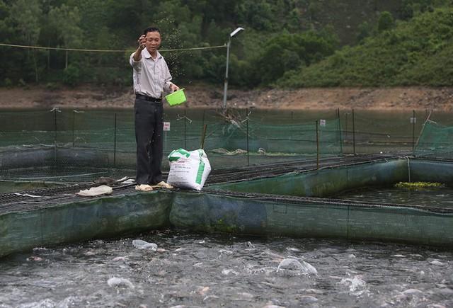 Cá giống được ông Hạnh nhập từ Viện nghiên cứu nuôi trồng thủy sản I, Trung tâm giống thủy sản Hà Nội. Thức ăn chính của cá là tôm tép thu mua ở các chợ, ngày cho ăn một lần. Tôi đã nhiều lần thất bại khi nuôi thử các giống cá khác, cuối cùng may mắn thành công với mô hình nuôi cá lăng, ông Lưu Văn Hạnh nói.