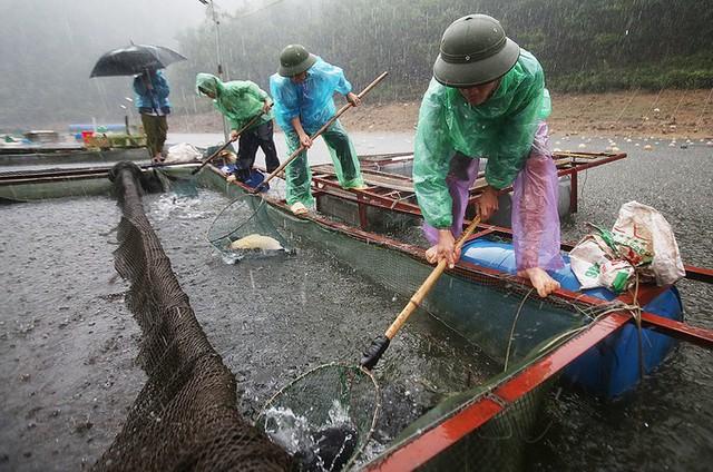 Hồ Gò Miếu nằm giữa vùng núi cao, nước hồ tự nhiên, xung quanh không có con người sinh sống, không có ống cống xả thải ra môi trường nước. Nhờ vậy cá ít bị dịch bênh. Tuy nhiên, khi nuôi tôi vẫn phòng bệnh cho cá bằng tỏi tươi. Tỏi xay trộn cám cho cá ăn 2 lần mỗi tháng, ông Lưu Văn Hạnh nói.