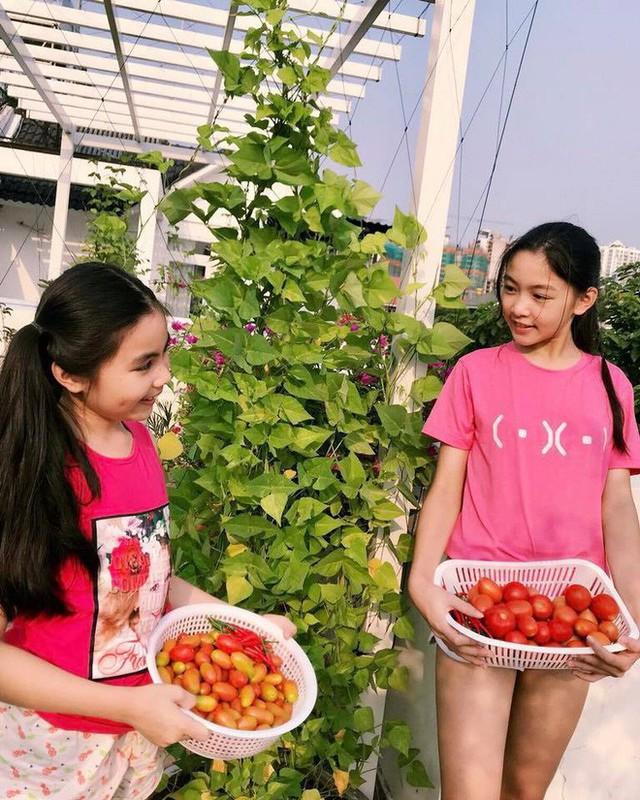 Một ngày thu hoạch cà chua của Lọ Lem và Hạt Dẻ.
