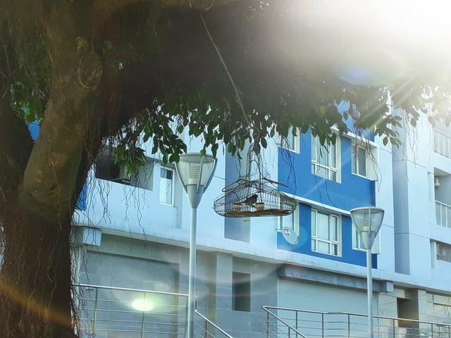 Chung cư với hàng trăm căn hộ và hàng nghìn người sinh sống, giờ vắng đến nỗi người dân có thể vào bẫy chim ngay tại khu sân vui chơi