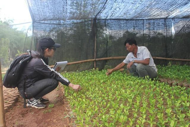 Lão nông đang từng bước xây dựng Kon Gang thành vùng trồng trái cây an toàn và sạch