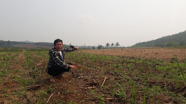 Huyện Nông Cống (Thanh Hoá): Dân khóc ròng vì dự án bò sữa dở dang